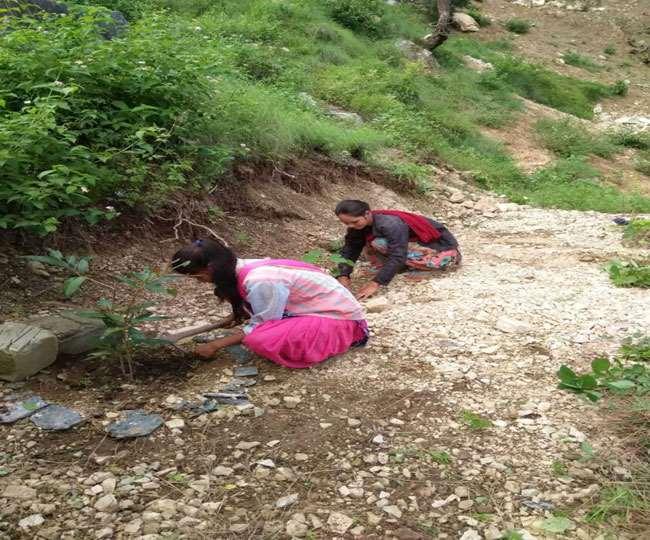 उत्तराखंड : यहां प्रवासियों के पौधों से स्कूलों में हरियाली छाने लगी, प्रेरणास्रोत बने इनके कार्य सभी के लिए