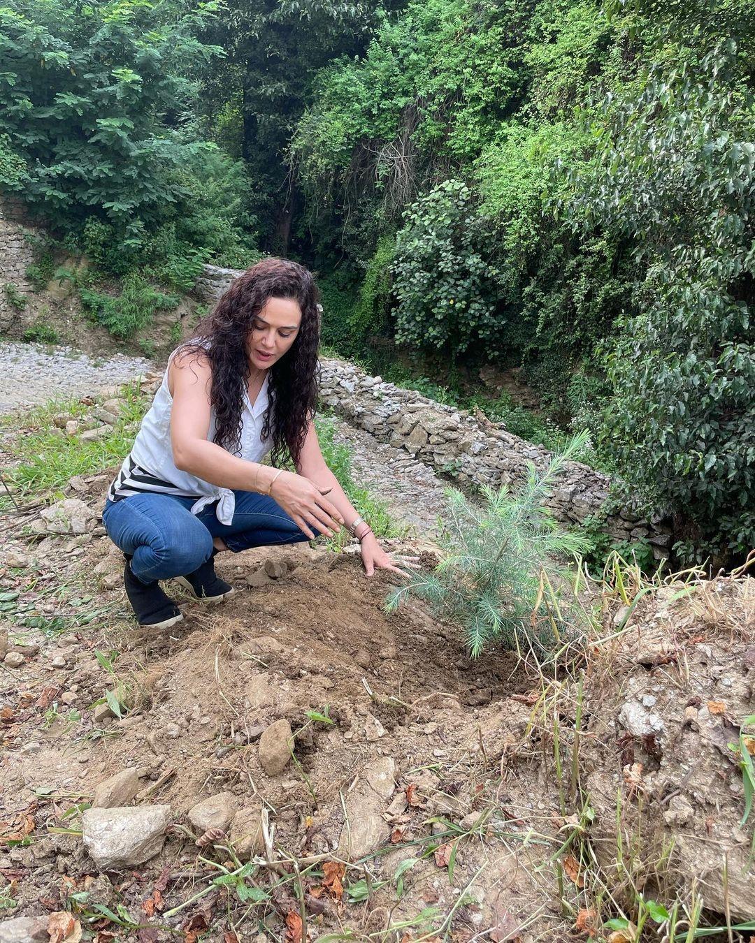बॉलीवुड : 'डिंपल गर्ल' ने शिमला में लगाया पौधा, लगाया देवदार का पौधा