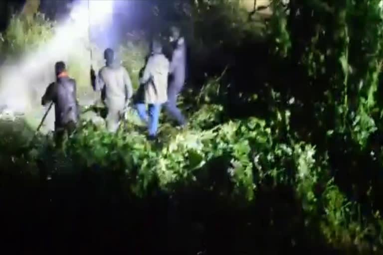 उत्तराखंड चमोली ब्रेकिंग न्यूज़ : जोशीमठ में जंगली जानवरों की दहशत, वनकर्मियों ने भालू को मार डाला
